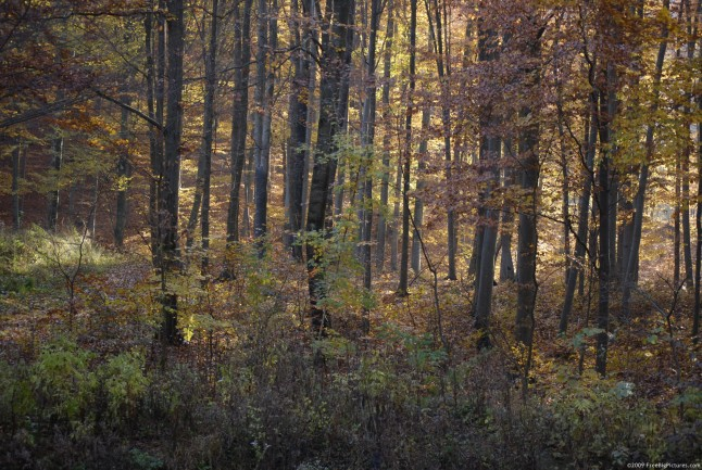 Fall Wooded Wallpaper 55 Acres Union Township Clearfield County Pa Rockton