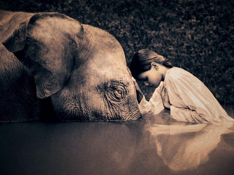 spirit-animal-elephant