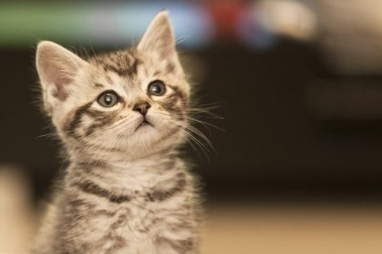 Don't be like this cat. How to avoid being bullied by a recruitment agency.