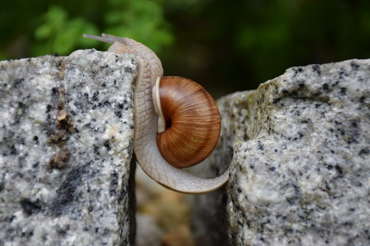 A snail climbing wall, overcoming obstacles to finding a new job