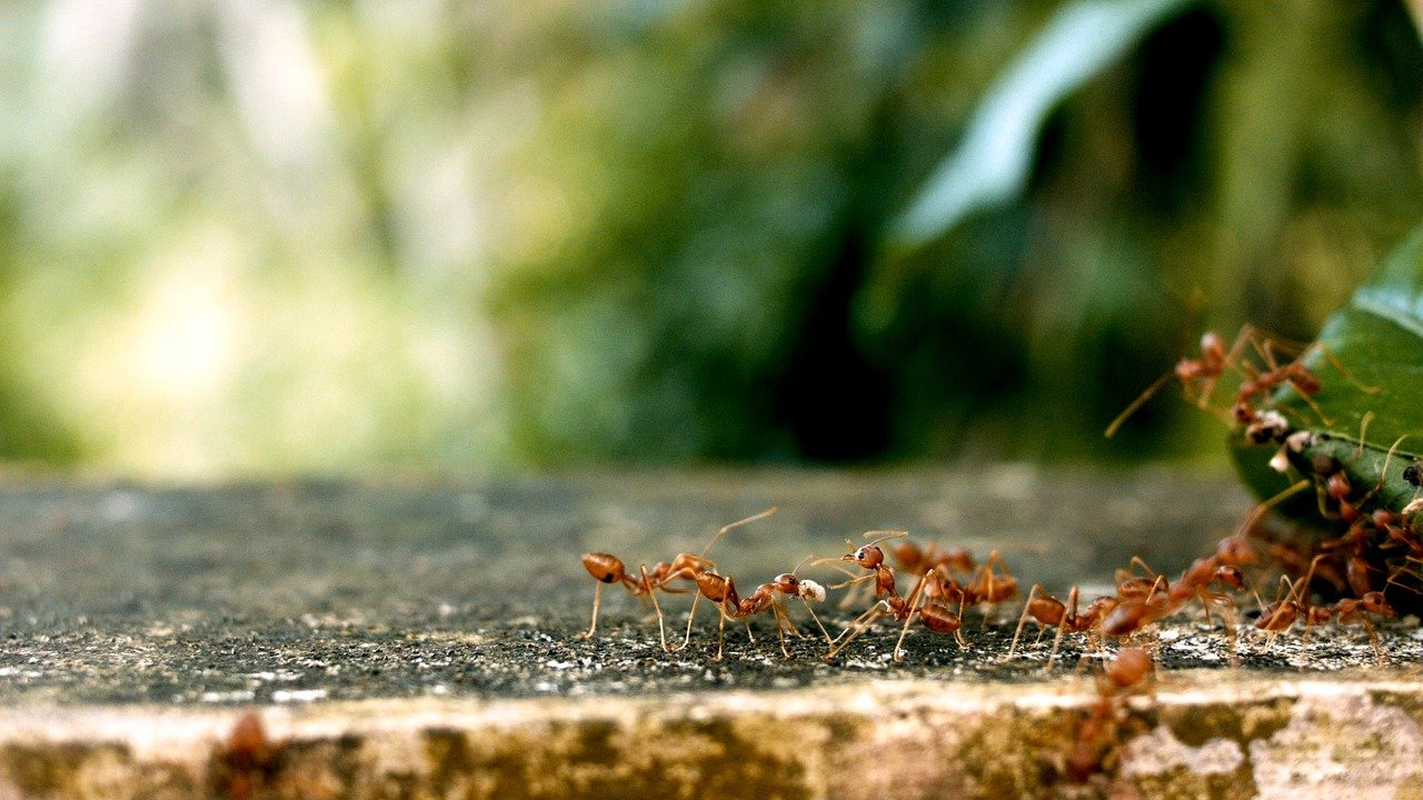 Dec without Ant – how understanding motivation can help you retain staff