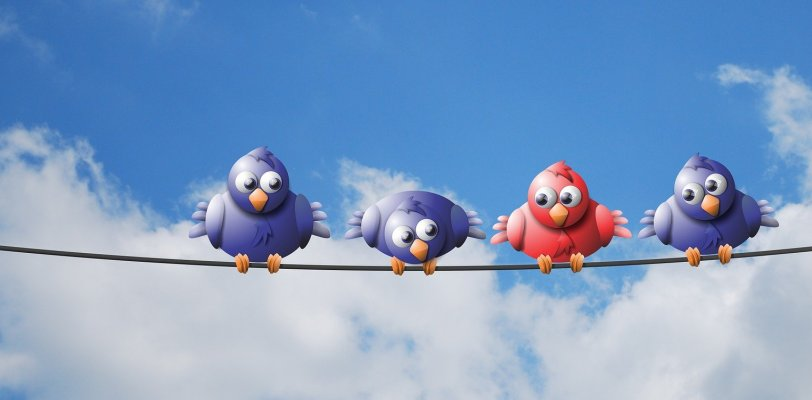 Don't worry if you are attending an IT job interview and you feel like an imposter. You're not alone. Like the red bird in this image - the others are blue.