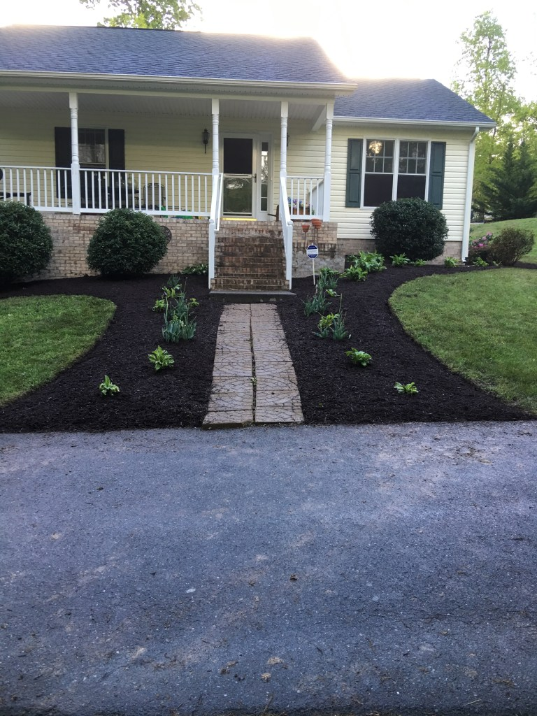After: Holly bushes trimmed, Azalea moved to outside corner of house, Evergreen trees moved, mulching done.