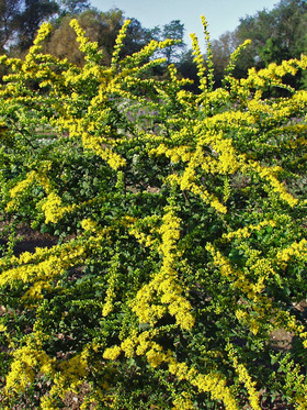 Giant mound of deep green and yellow color