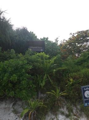 Maya Bay Before restoration