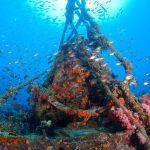 dive trips, advanced open water, king cruiser phi phi