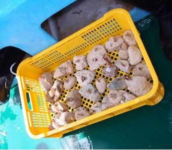 conservation diving coral propagation