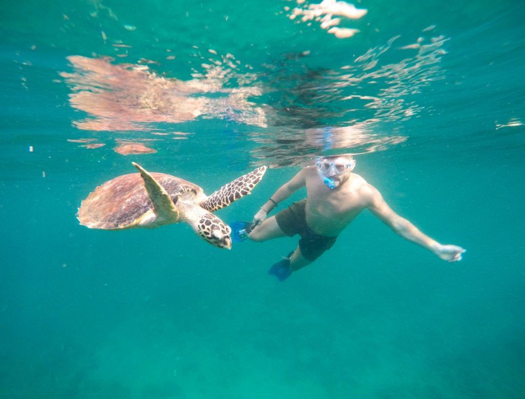 snorkeling turtle koh phi phi
