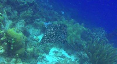 Bonaire Dive Travel Guide - Bluewater Dive Travel