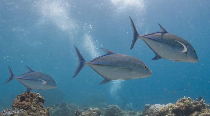 Diving In Manado Bunaken Bluewater Dive Travel