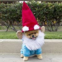 Super fun Halloween costume ideas for your dogs...
