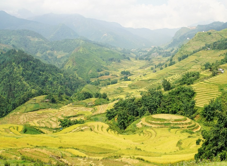 Hiking through the rice terraces at harvest time