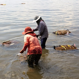 Women retrieve crabs for adjacent restaurants