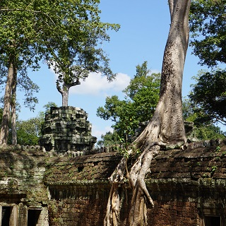 Ta Prohm is famous for its role in Tomb Raider