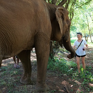 Sophie feeds an elephant