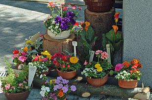 Blumen Augustyn  Angebote