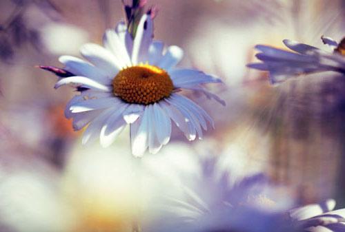 Blumenbilder Zum Ausdrucken kostenlose malvorlage blumen
