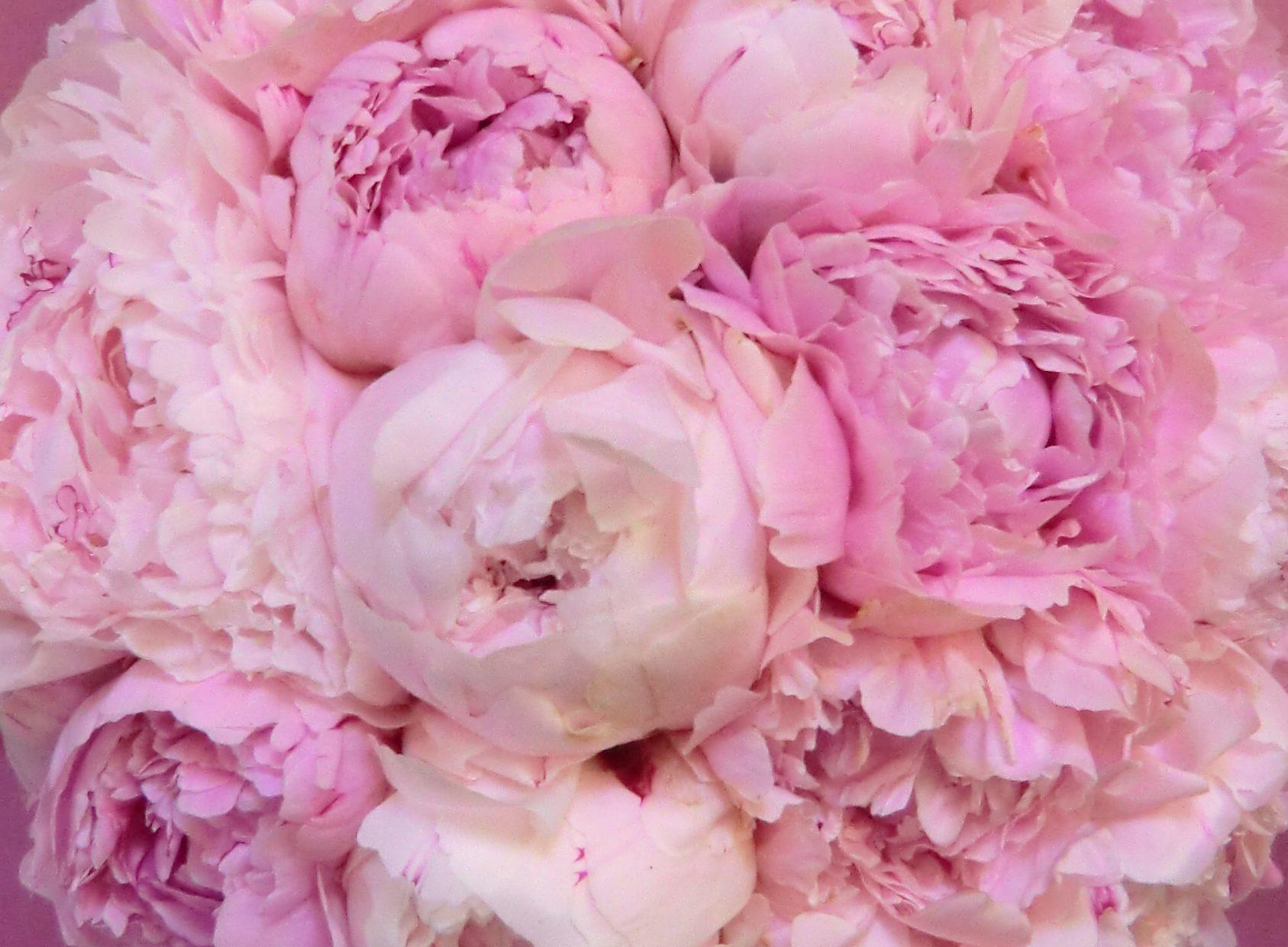 Blumen Floristik Frensch