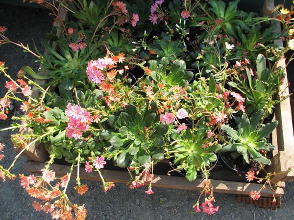 Grtnerei  Blumen Gtlich