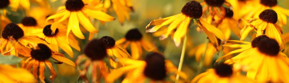 Schaugarten  Blumen Gtlich