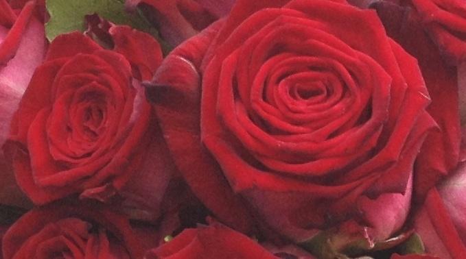Blog  Blumen Gtlich  Sie haben den Anlass  Wir haben