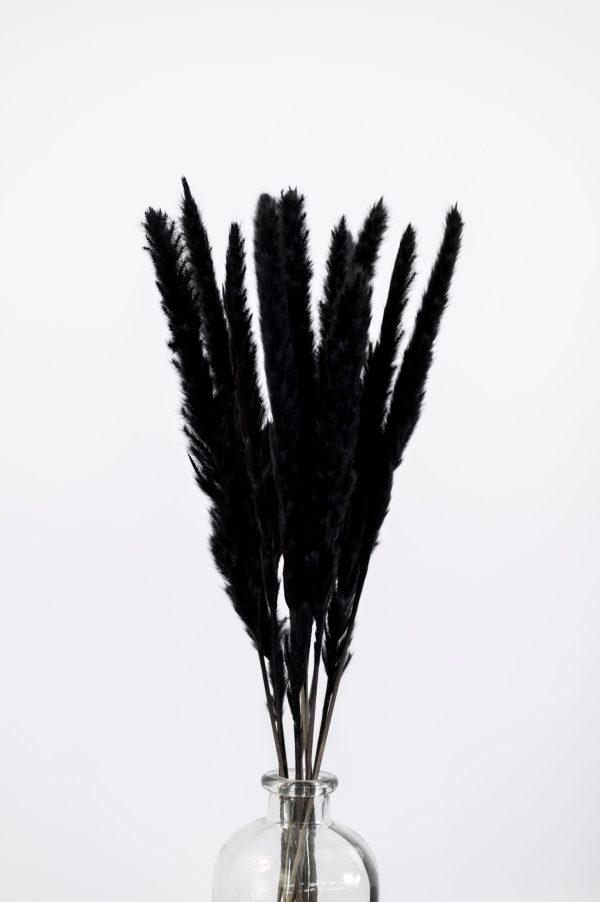 Pampasgras schwarz