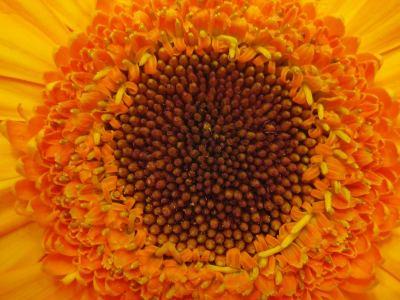 blume_orange_innen Blumen Hoenekop Herbern