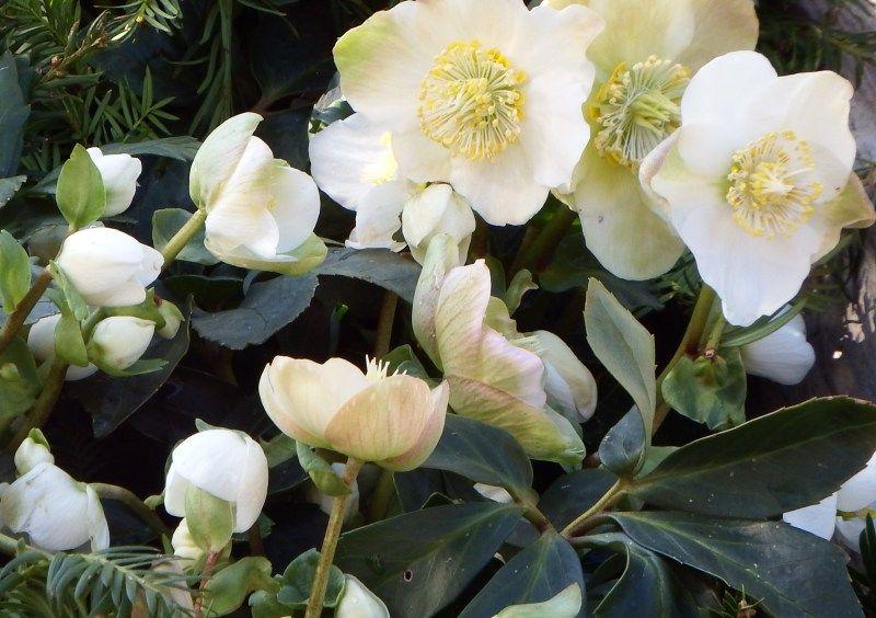 Blumen Kiess Floristik HochzeitsfloristikTrauerfloristikGrabpflege Lieferservice