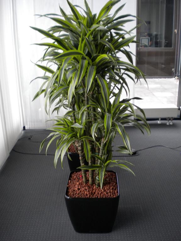 Hydrokultur  Blumen wilheine Hannover
