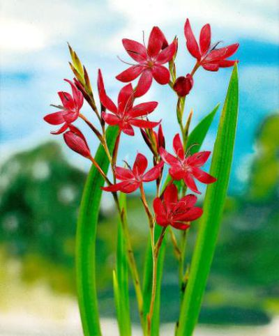 Ranunkeln Schnittblumen Kaufen schnittblumen im winter kaufen ratgeber garten zimmerpflanzen