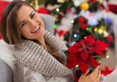 Blumende  Blumen zu Weihnachten verschenken