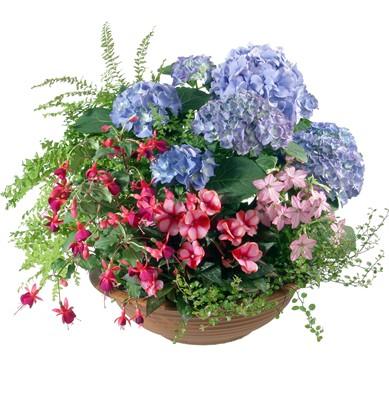 Gartenzauber - Blumen Bergmann