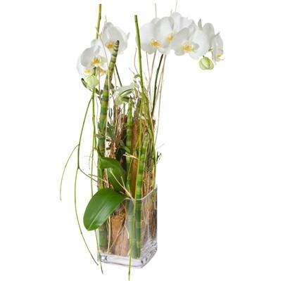 Orchideenzauberei - Blumen Bergmann