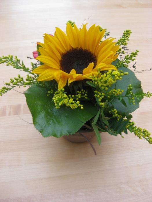 Blumen Boeder  Mietpflanzen Dekorationen Blumendekoration