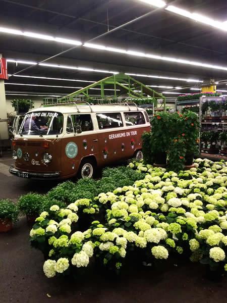 Bernard Rogge  Blumenladen in der Lotterstrasse Osnabrck