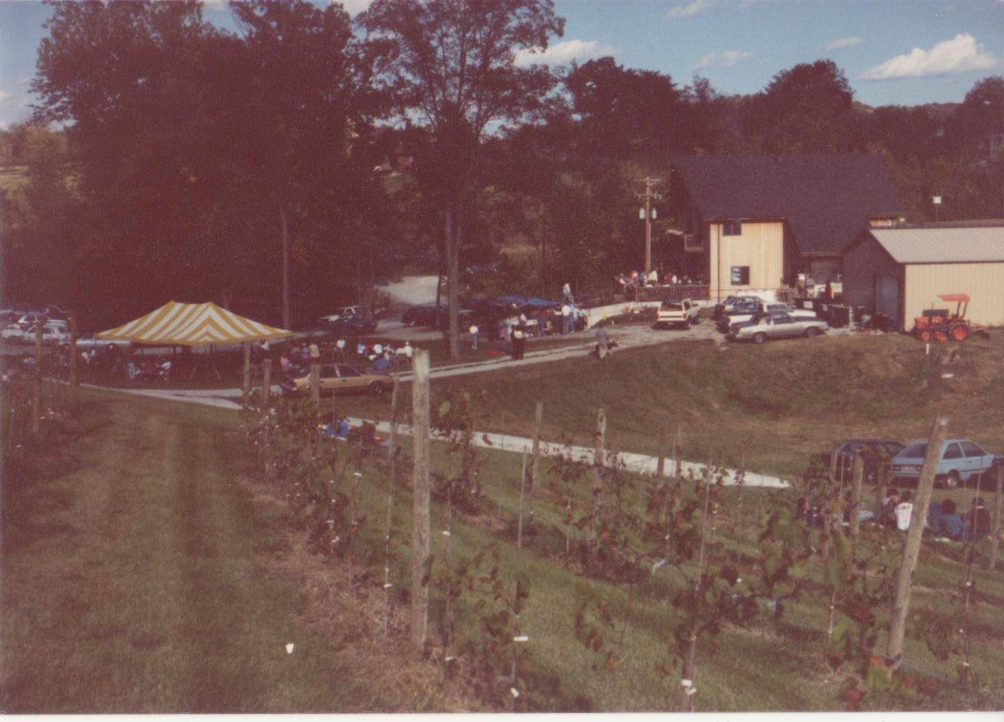 Vineyard at the winery circa 1989