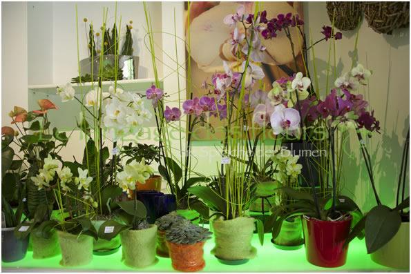 Blumenladen Mnchen Blumen in Mnchen Blumenladen in Mnchen