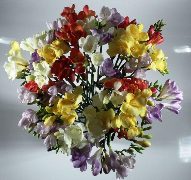 Blumenstrau Blumenversand Frhling Freesien bunt