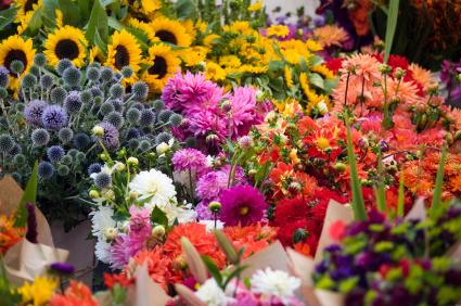 Anbieter Blumenversand  BlumenversandDeutschlandcom