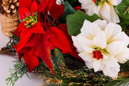 Blumen zu Weihnachten online versenden Weihnachtsblumen