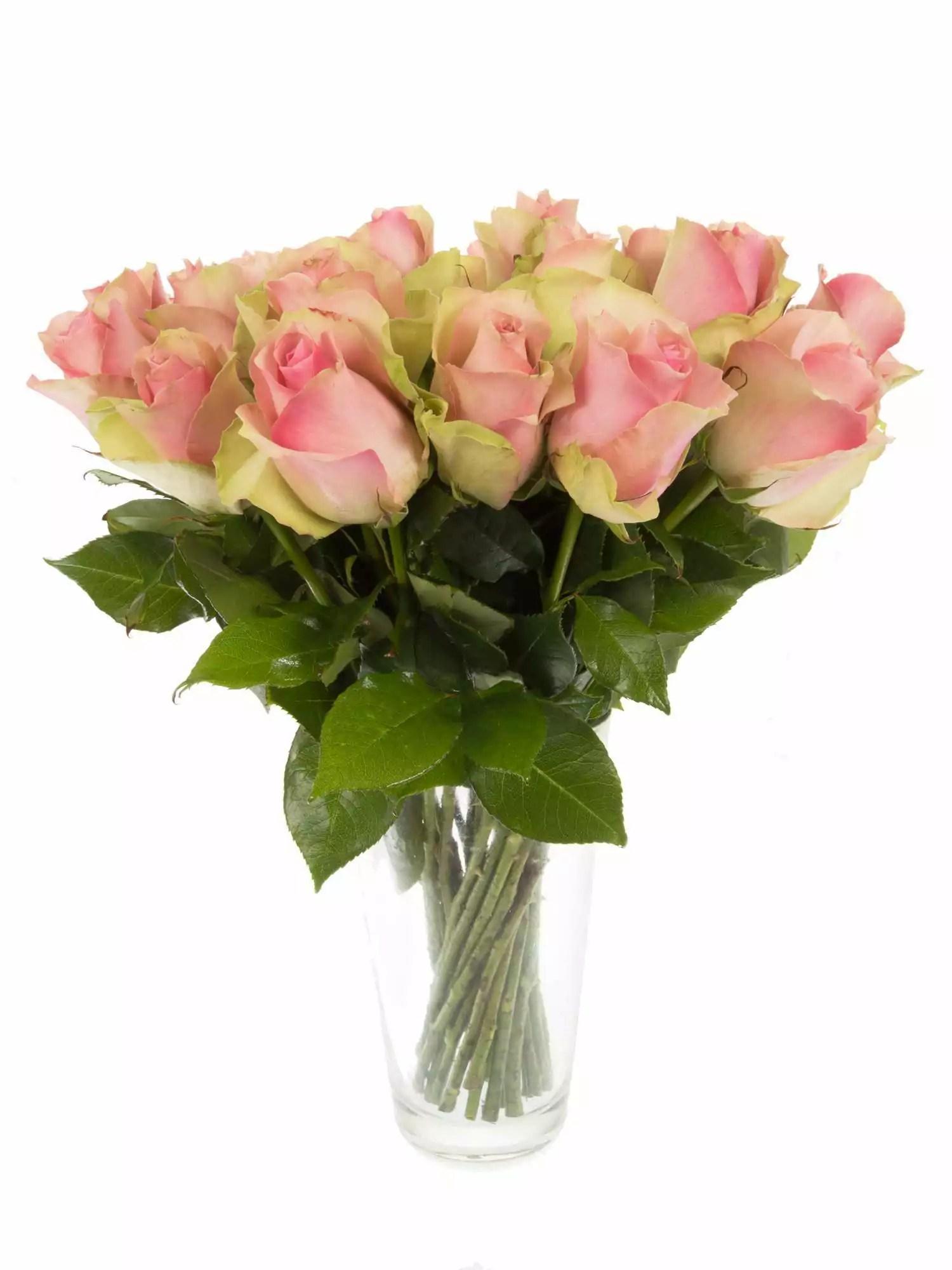 Rosen Belle Ros rosa bestellen  Blumigo