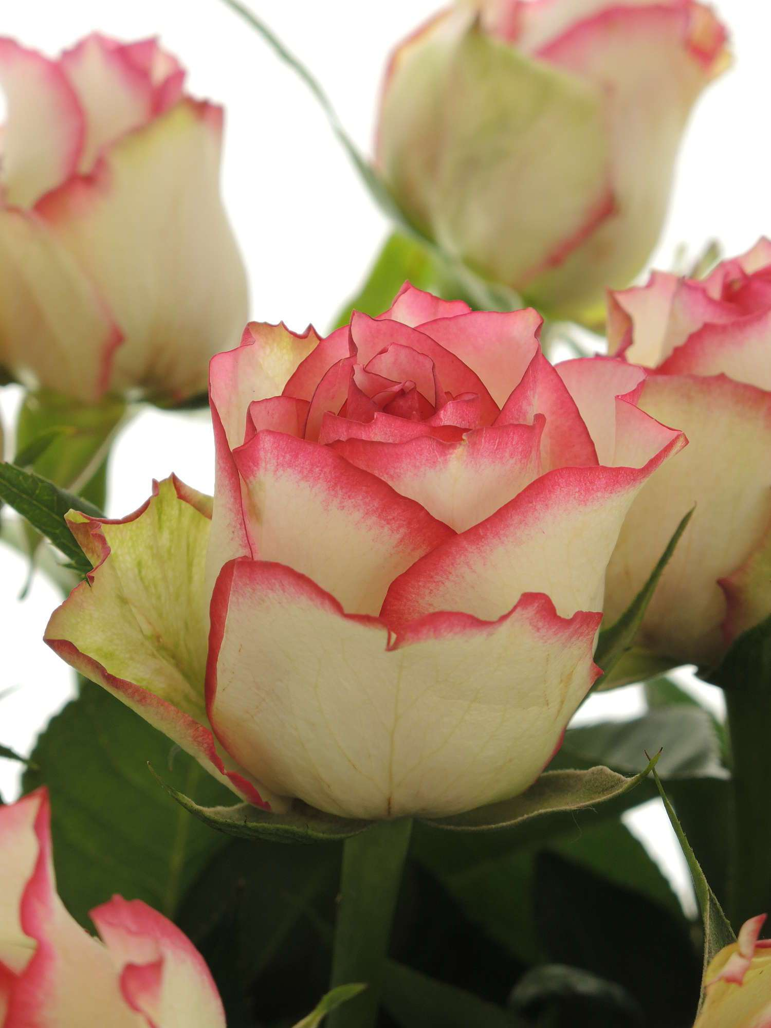 Bilder Mit Rosen blumenstrau mit versch rosen und