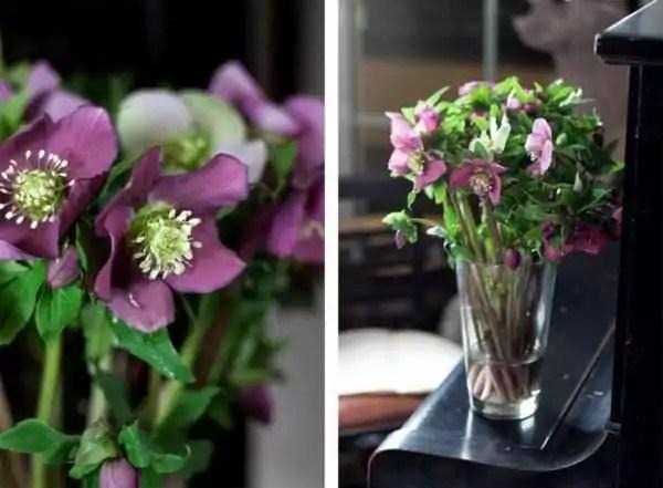 Christrosen in der Vase  mein Winterersatz  Blumigo
