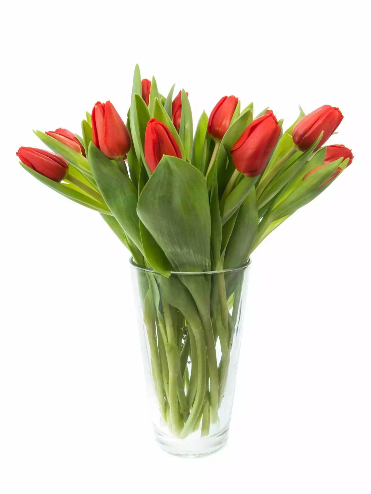 Tulpen Escape rot bestellen  Blumigo