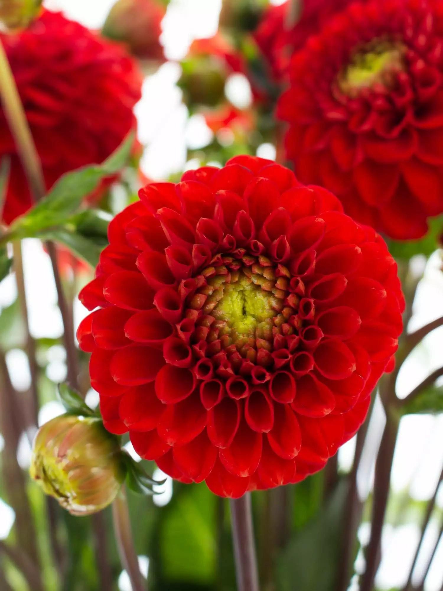 Blumen September Hochzeit tischdekoration goldene