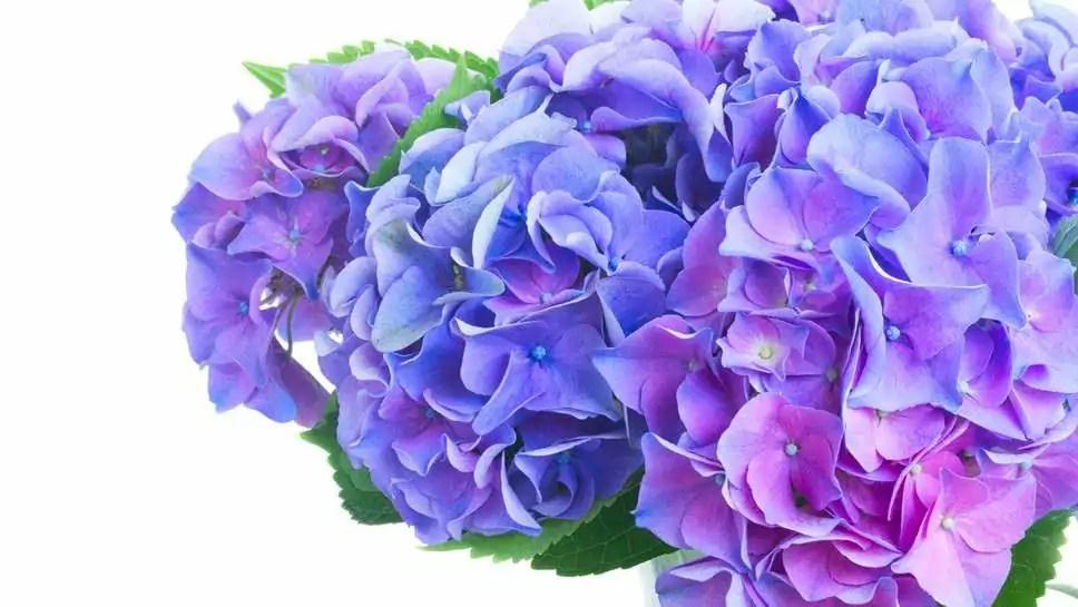 Welche Blumen gibt es im Juni Schnittblumen Saison