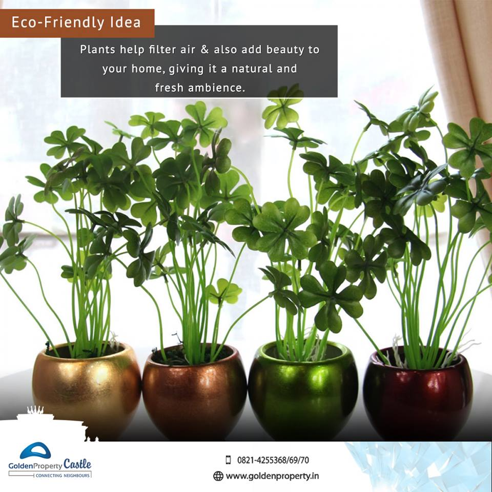 Maintenance Easy House Plants