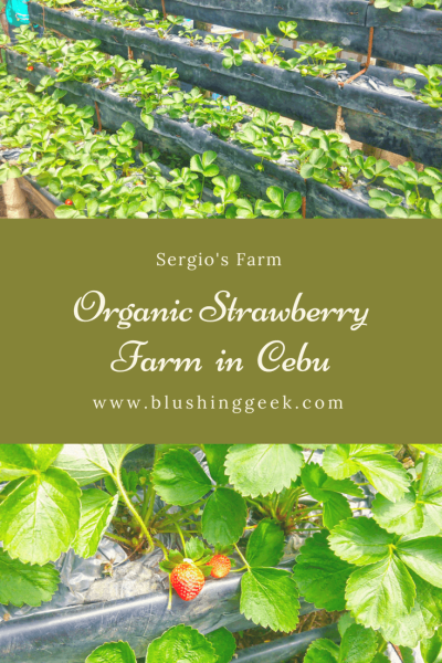 Sergio's Farm - The First and Only Organic Strawberry Farm in Cebu | Blushing Geek
