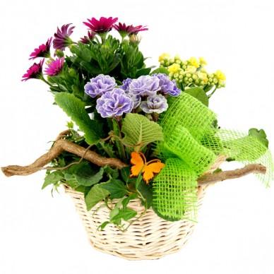 Pflanzgesteck Blumiges Prsent  Blhende Pflanzen  Nach Sorte  Zimmerpflanzen Blumenversand