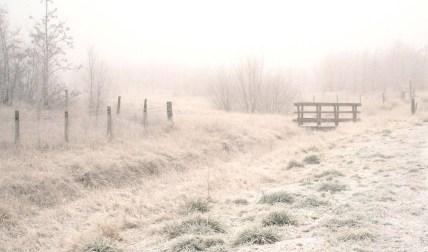 Snowy-path-SteveCopeland